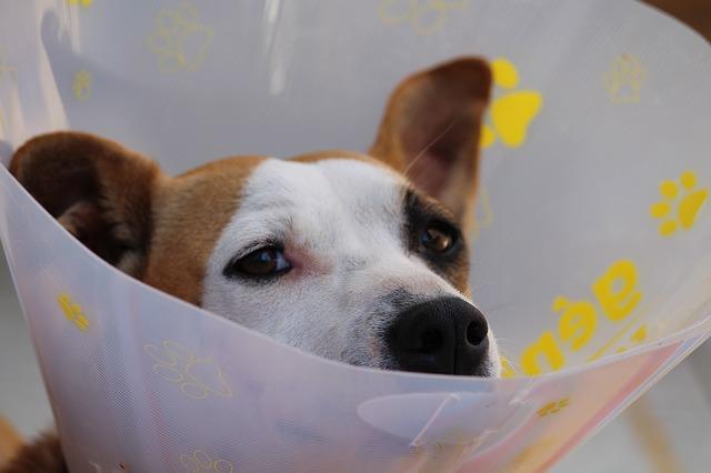 Tieroperationsversicherung