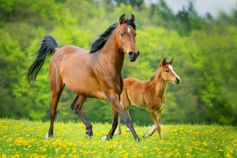 Pferd und Schwanz