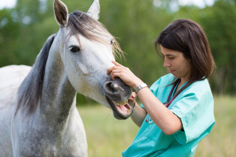 Pferd und Tierarzt